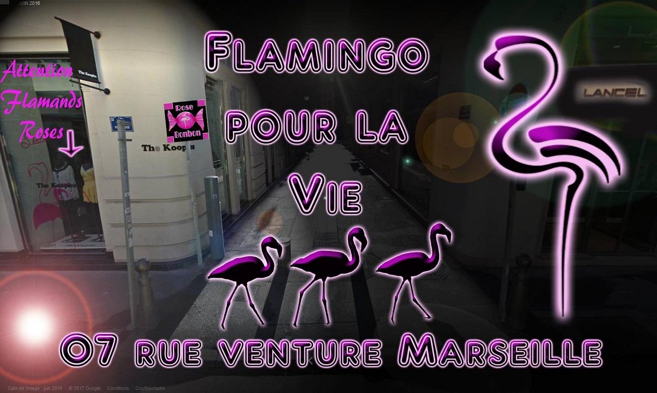 Le bar Flamingo